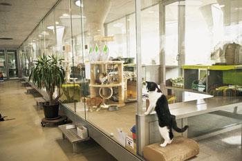 animal hoarding wenn tierliebe zum himmel stinkt berliner mieterverein e v. Black Bedroom Furniture Sets. Home Design Ideas