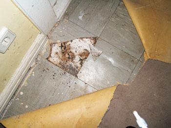 Asbesthaltige Fußbodenplatten ~ Asbest in fußbodenplatten bodenbeläge arbeitsmedizin krebs