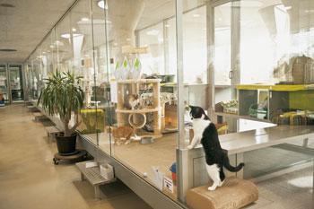 katzen kuscheltier mit anspruch berliner mieterverein e v. Black Bedroom Furniture Sets. Home Design Ideas