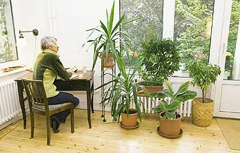 zimmerpflanzen wellness mit gr n co berliner mieterverein e v. Black Bedroom Furniture Sets. Home Design Ideas