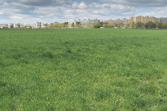 Wiesenflächen der Buckower Felder