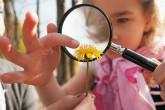 Kind betrachtet Blume unter der Lupe