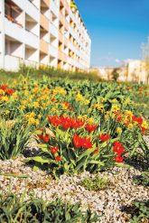 Wohnblock mit Vorgarten in Lübbenau