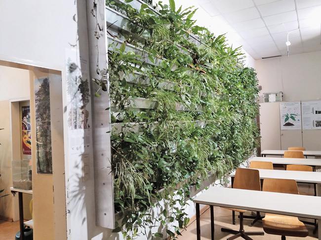 Begrünte Wand im Klassenzimmer