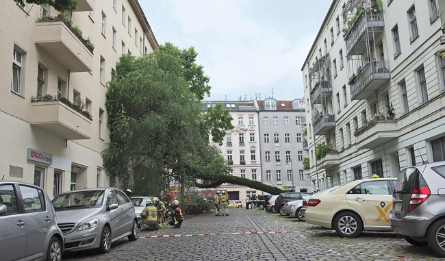 Auf eine Fassade in der Neuköllner Wissmannstraße gestürzter Baum