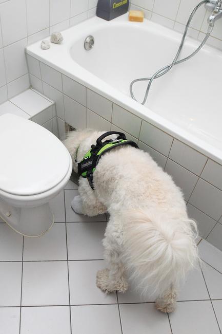 """Als Schimmel-""""Ermittler"""" kommen auch speziell geschulte Hunde zum Einsatz"""