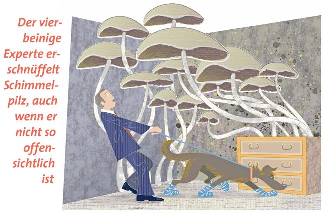 Illustration: Suche nach Schimmelpilzen