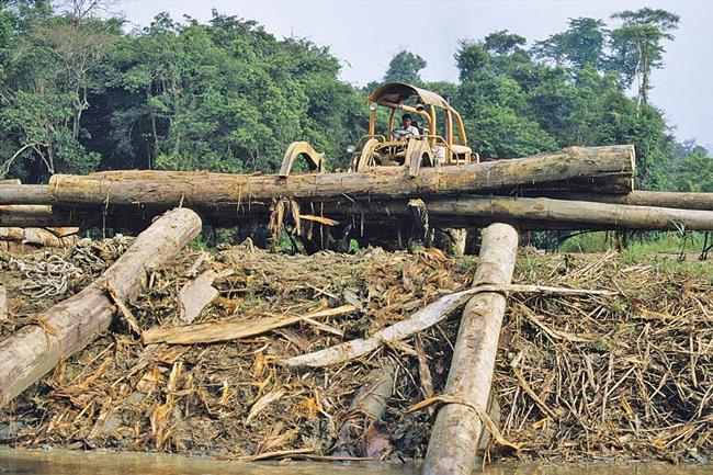 Rodungen auf Borneo