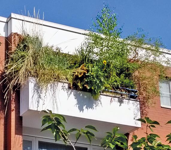 Überwucherter Balkon