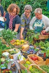 Geerntetes Obst und Gemüse