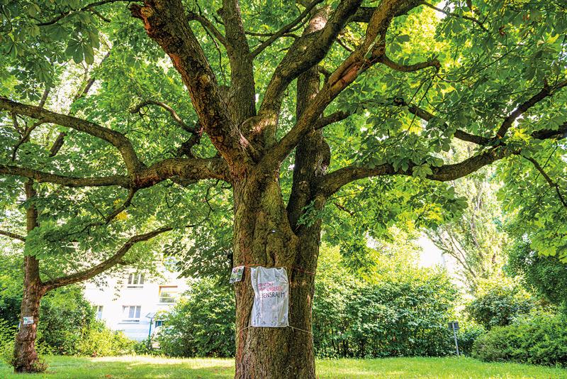 Innenhof, alter Baum mit Protestplakat
